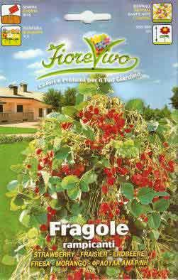 Fragole rampicanti semilandia for Fragole piante vendita