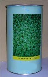 dichondra repens semilandia