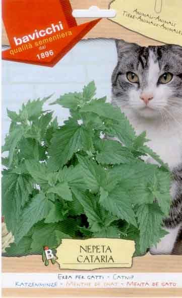 Nepeta cataria erba per gatti semilandia for Erba per gatti